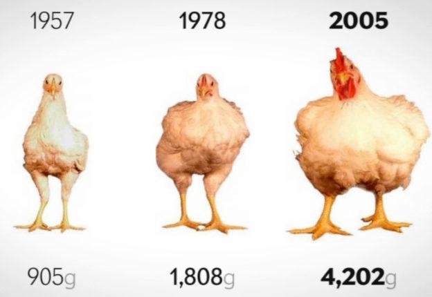 Сравнение веса курицы в 1957, 1978 и 2005 годах