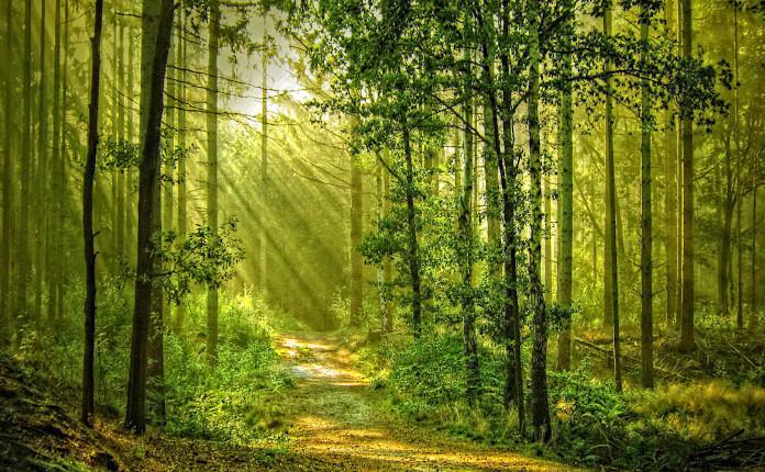 Назад к природе и здоровью
