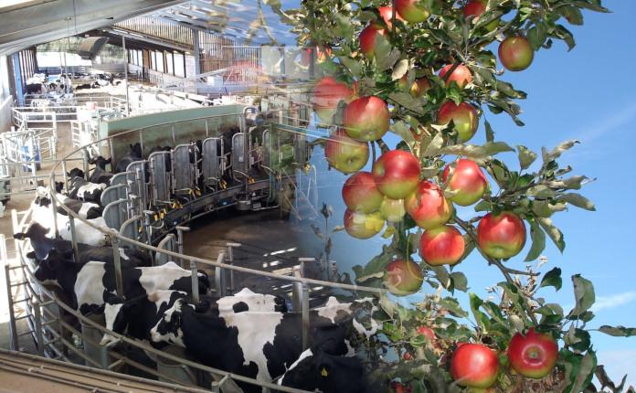 Ферма или фрукты